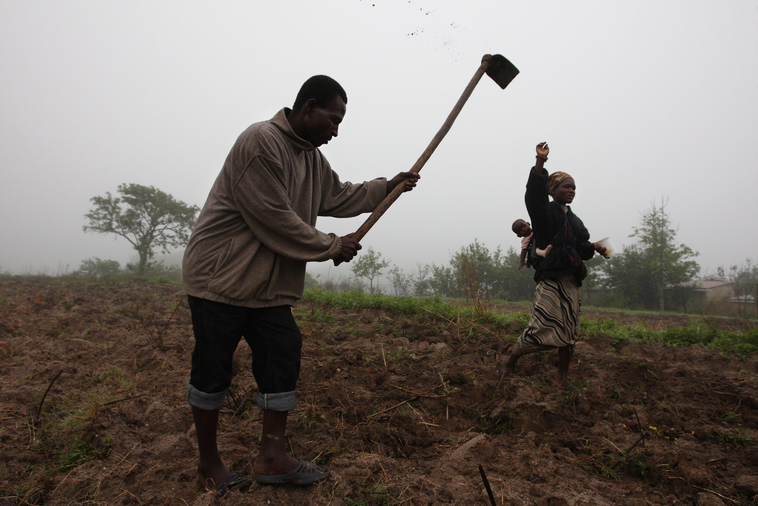 Empresários da América Latina querem investir no agronegócio em Angola