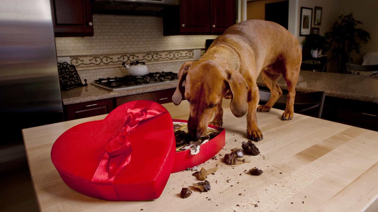 Risco de morte. Onze alimentos que o seu cão jamais deve comer