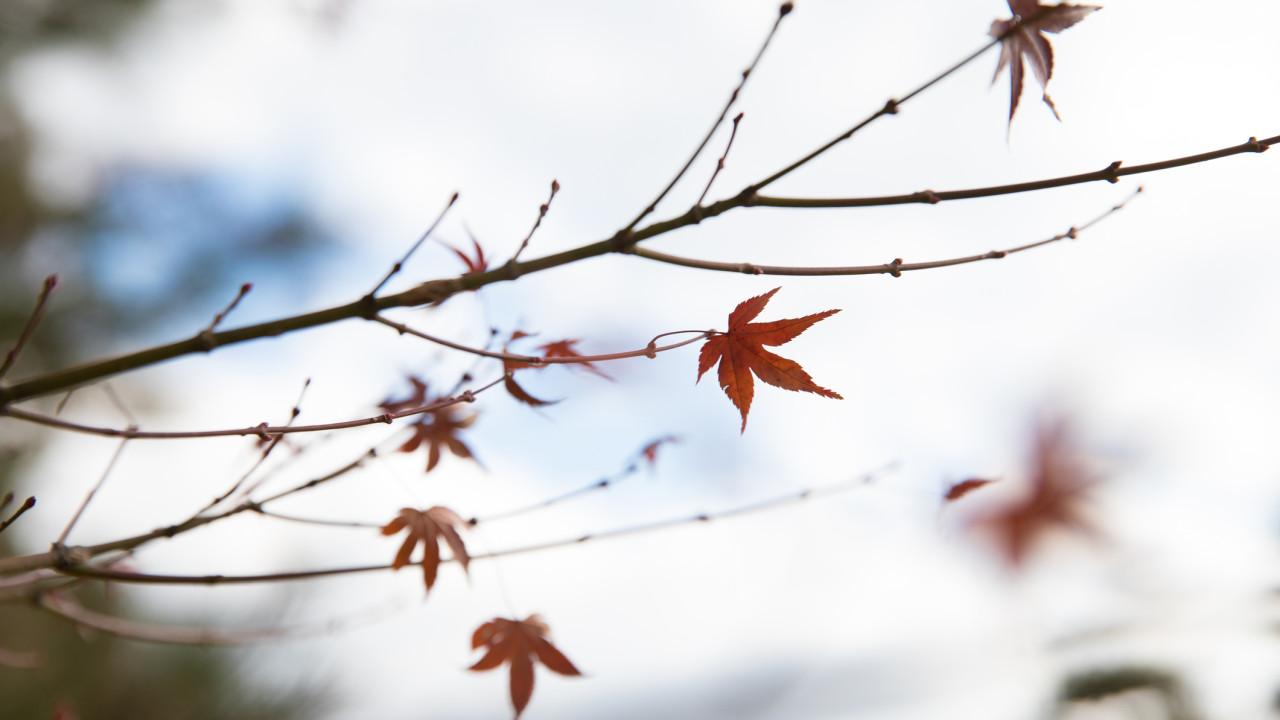 Adeus, verão. Outono é para ficar (de vez) e mostra-se este fim de semana