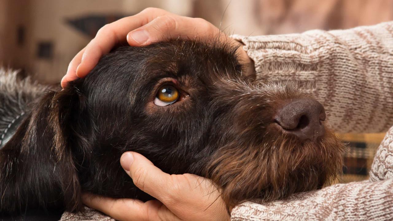 Cães e gatos vão deixar de ser comida para humanos na China