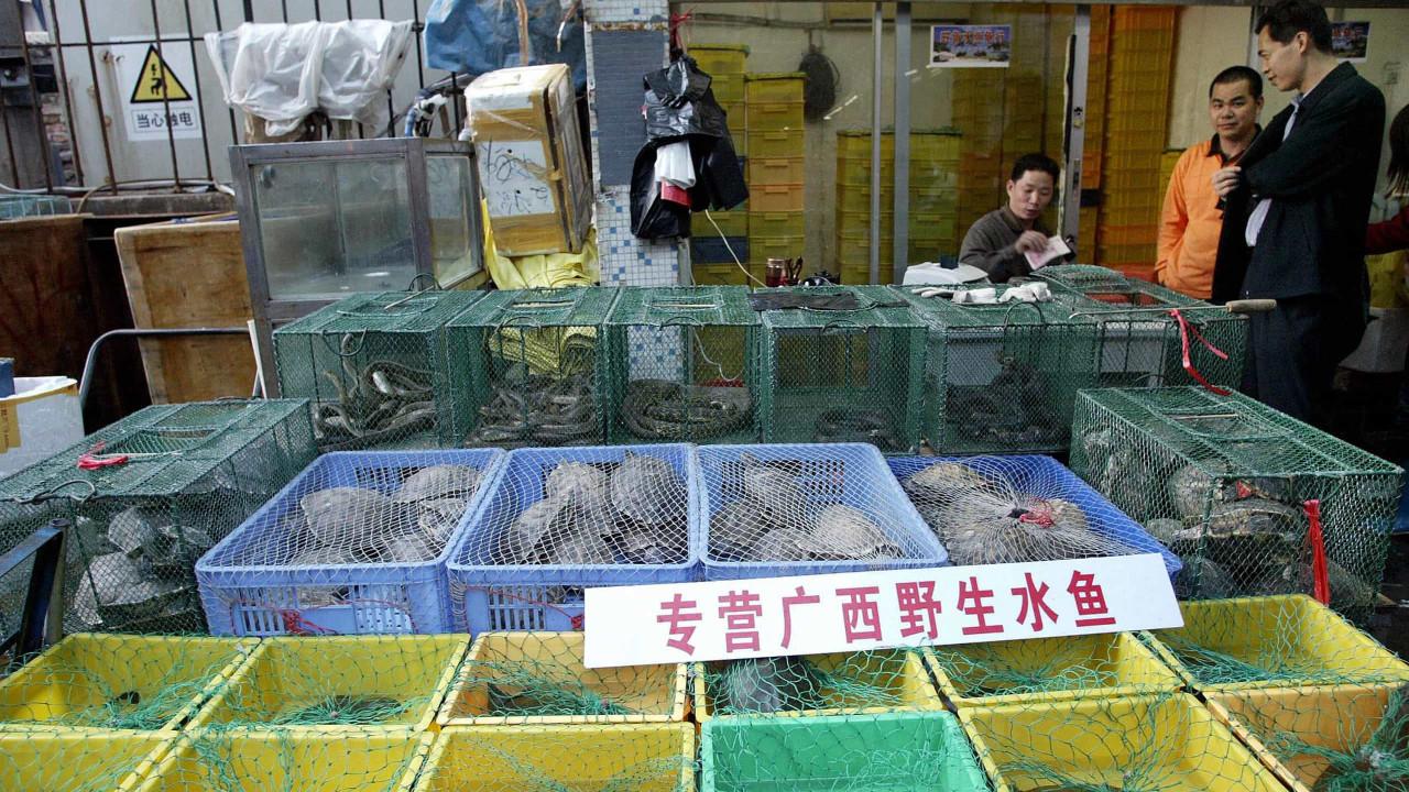 OMS pede fim de venda de animais selvagens vivos em mercados de comida