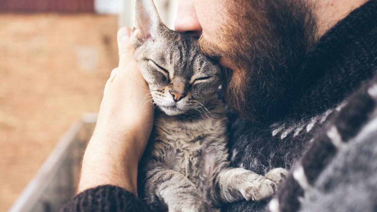Confinamento tornou gatos mais carinhosos e carentes, diz estudo