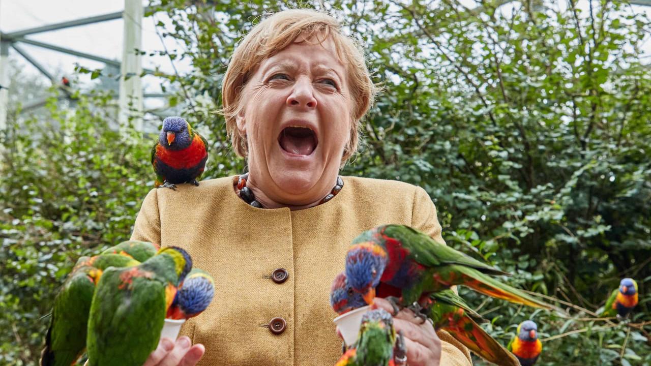 Chanceler Merkel e papagaios protagonizam momento insólito do dia