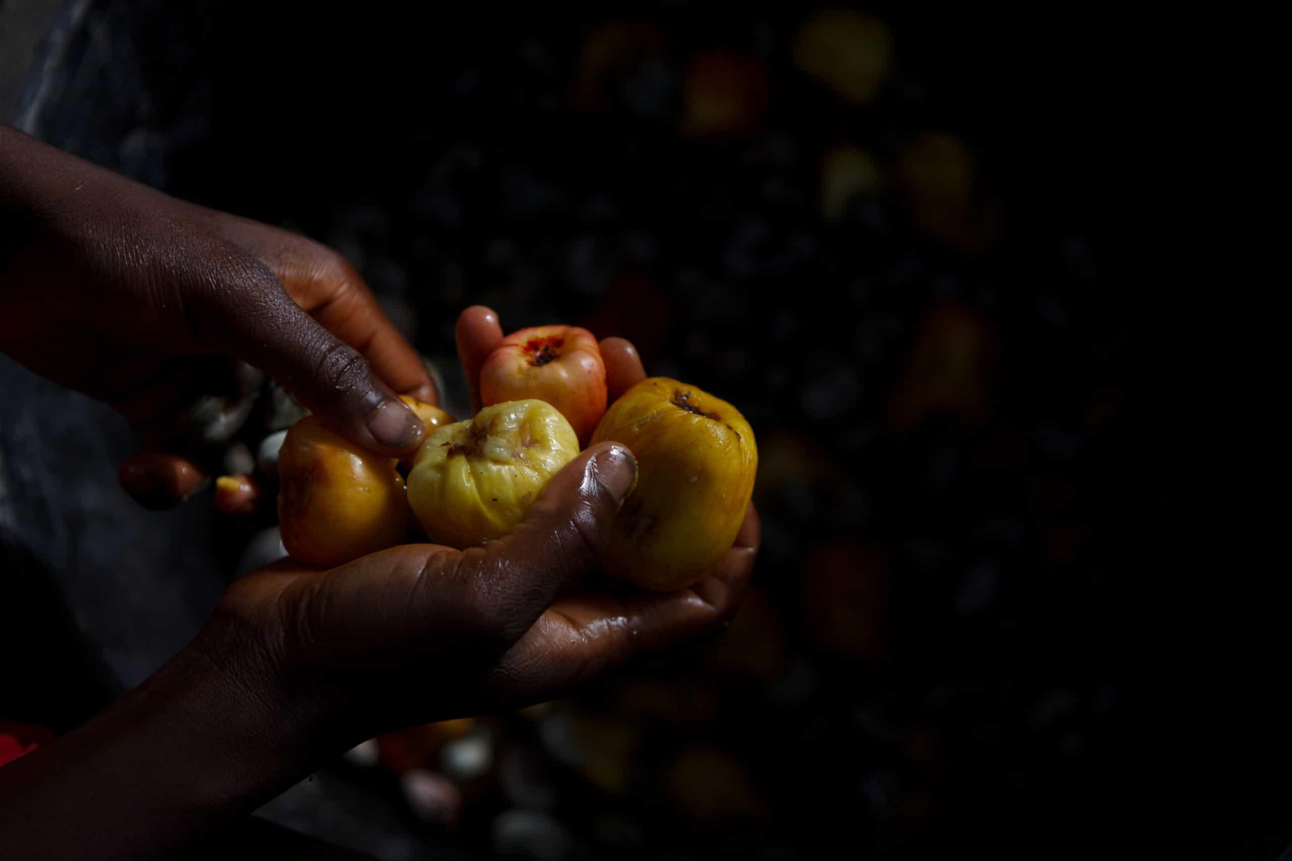 Moçambique prevê que produção de caju bata recorde