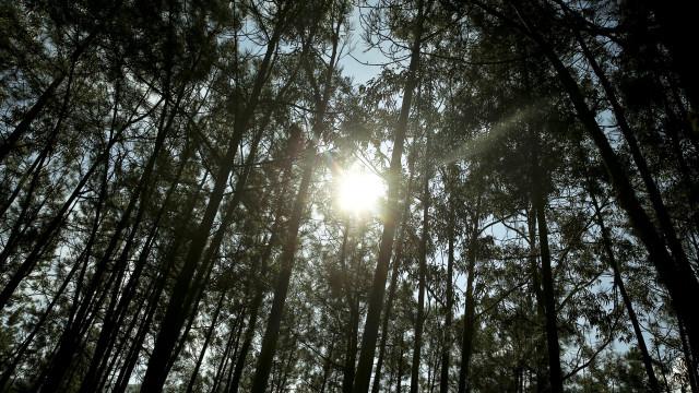 Oliveira do Hospital gasta um milhão de euros a eliminar eucaliptos