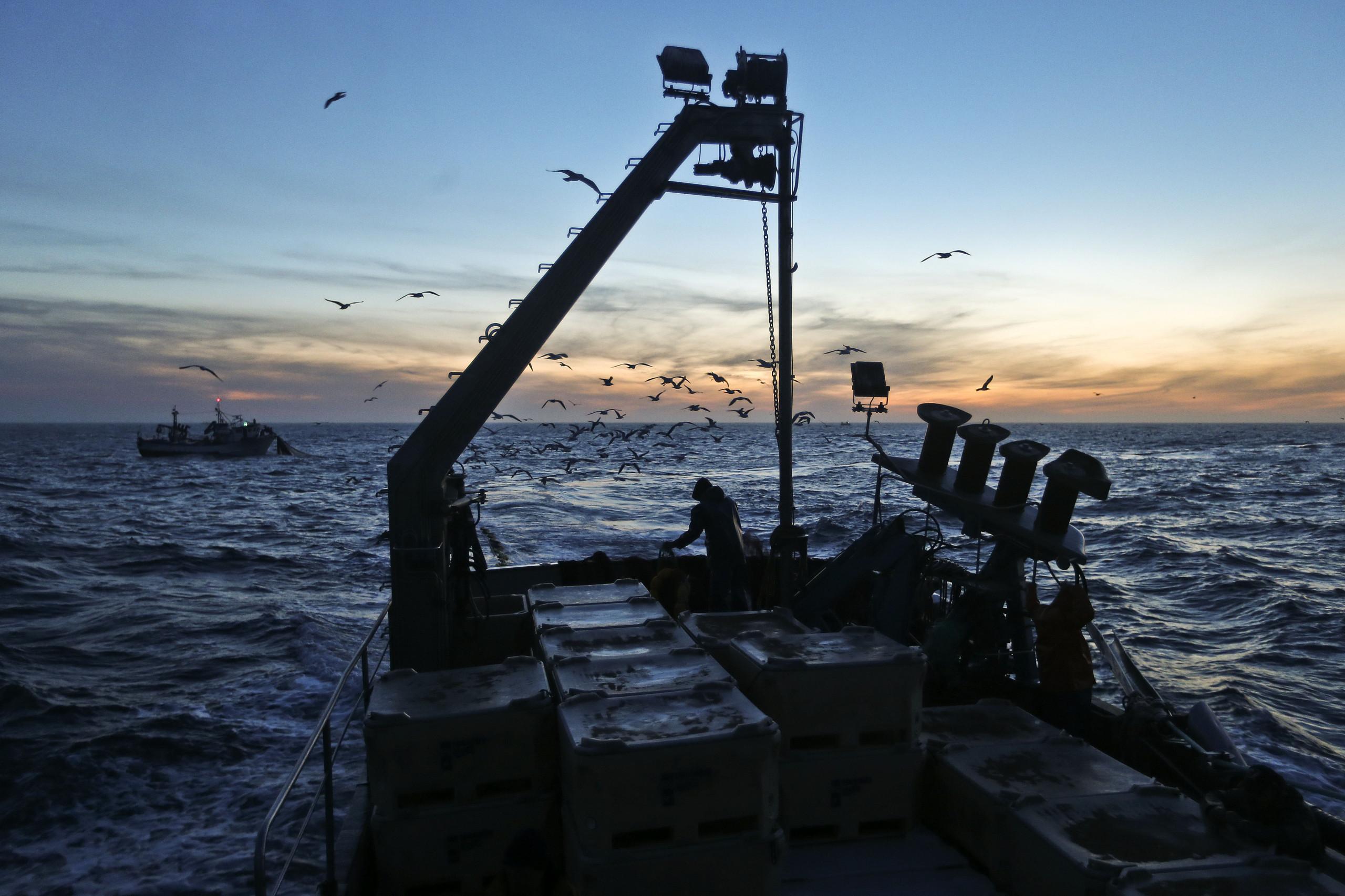 Organizações ibéricas da sardinha reunidas em encontro inédito em Peniche