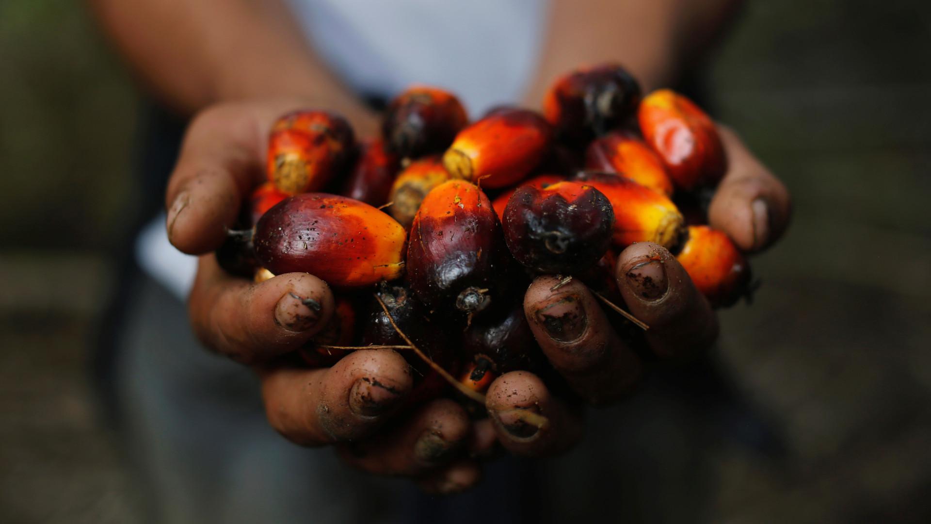 Resultado de imagem para óleo de palma