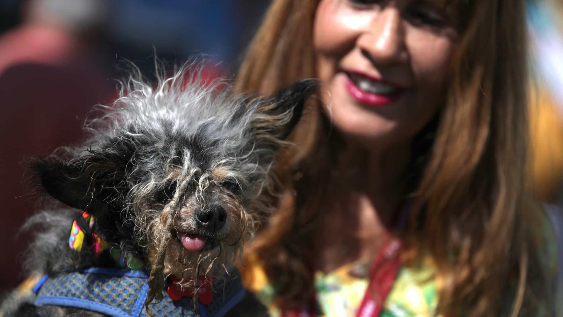 Está escolhido o cão mais feio do mundo. Chama-se Scamp the Tramp