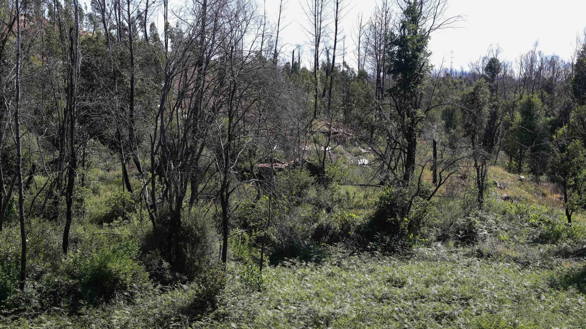 Três municípios candidataram-se ao financiamento para limpeza da floresta