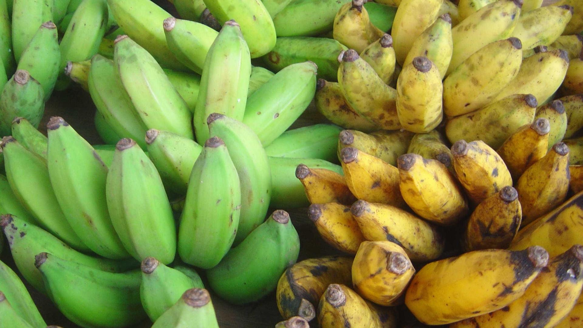 dieta da banana matinal – diminui o apetite e emagreça