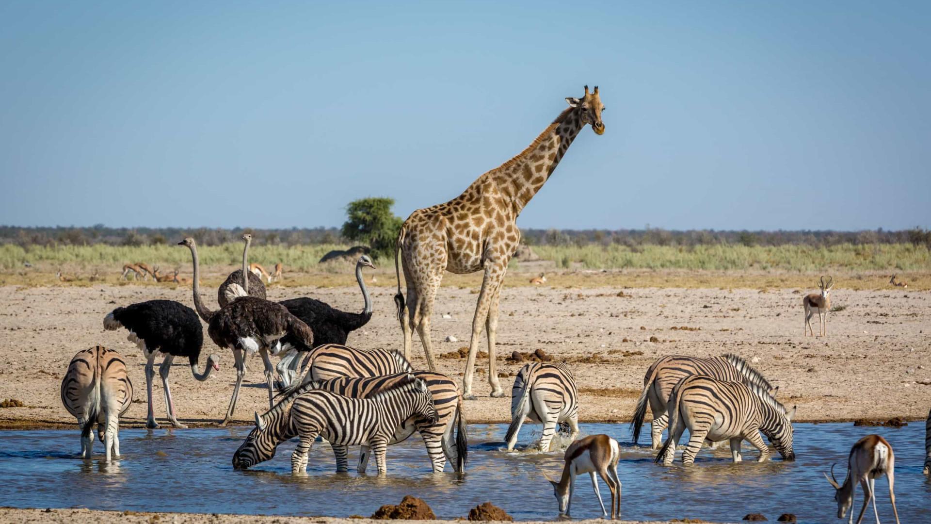 61e16cb8 Vida selvagem: Descubra os melhores safaris para fazer em África