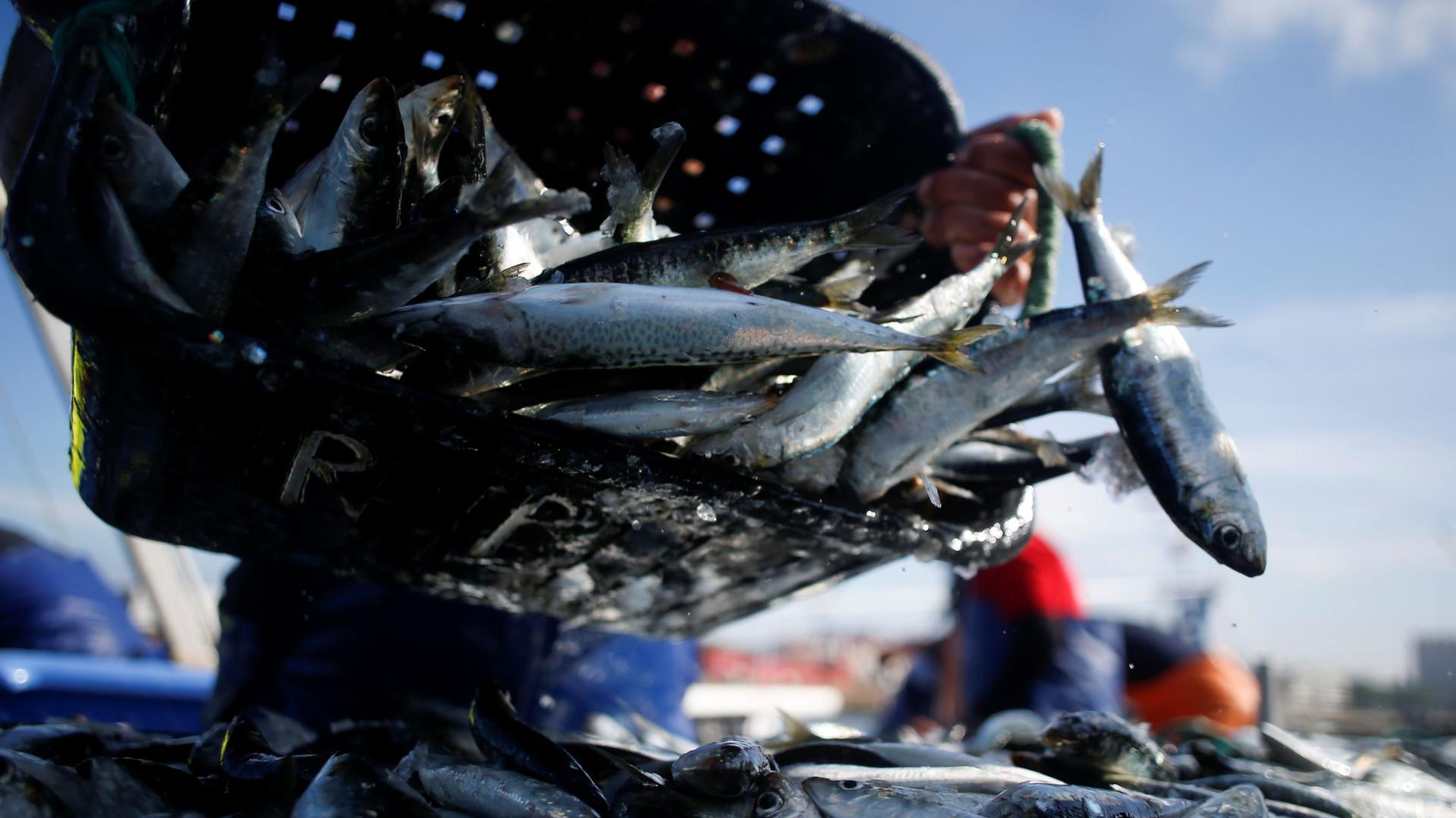 Pesca do cerco autorizada a descargas superiores a 20%