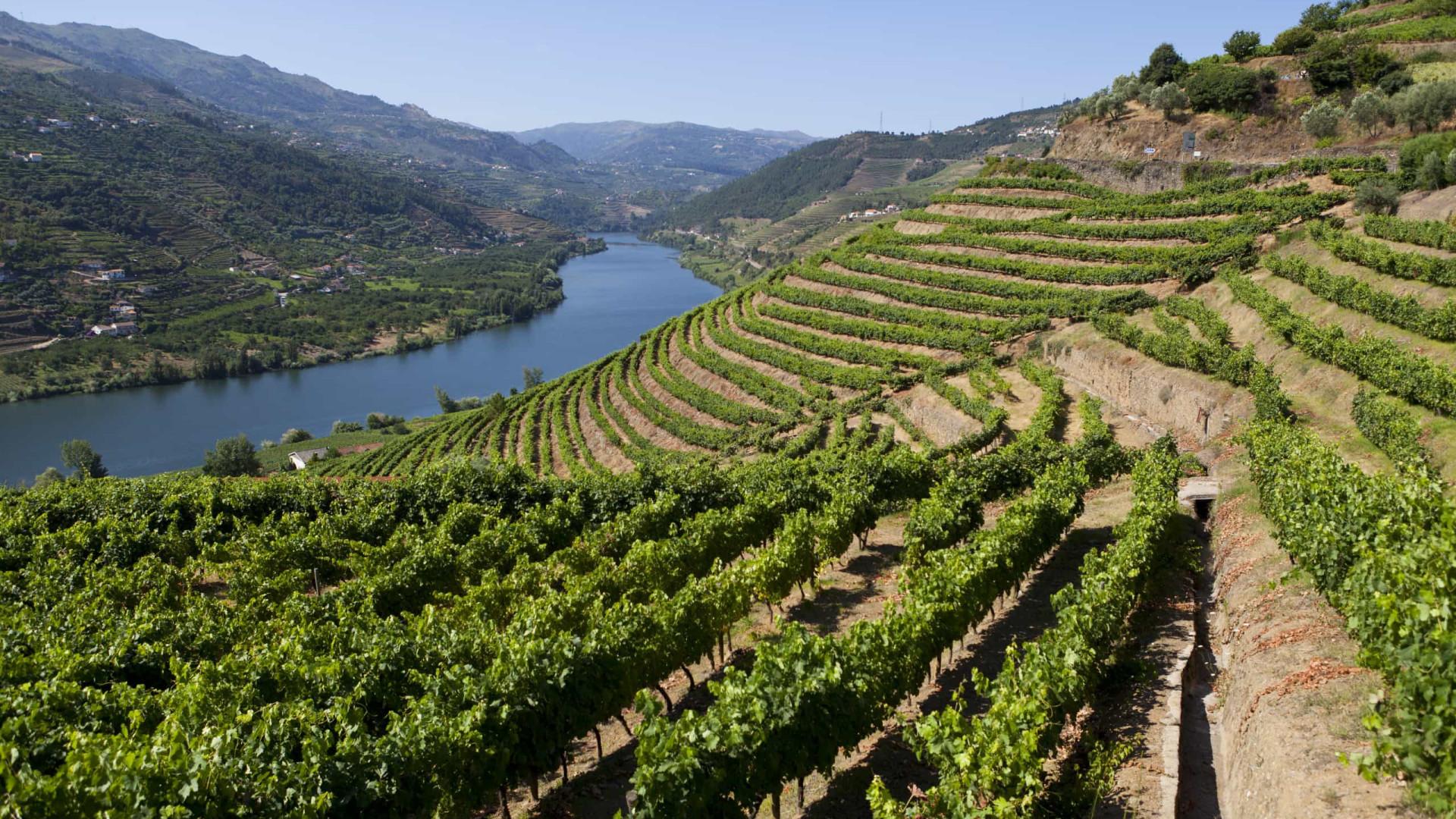 Douro alia tradição e inovação para ser mais sustentável e resiliente