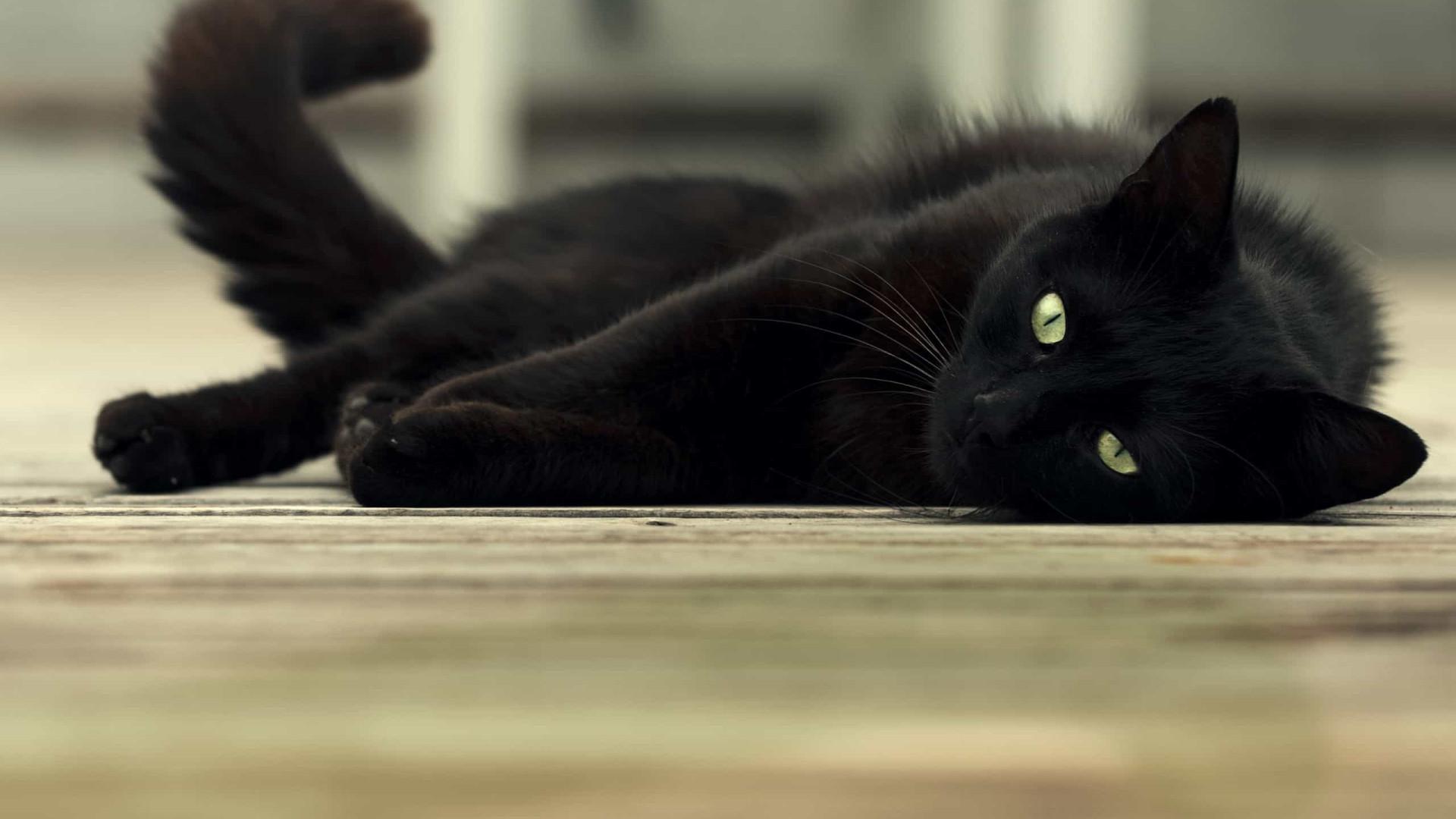 Identificado primeiro caso de um gato infetado com Covid-19 em Espanha