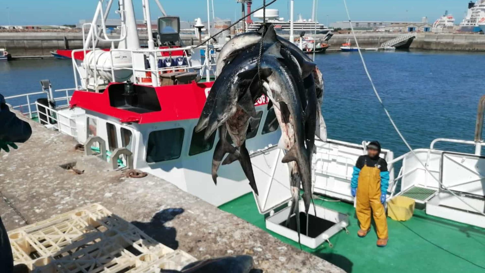Captura de tubarão anequim proibida até ao final do ano