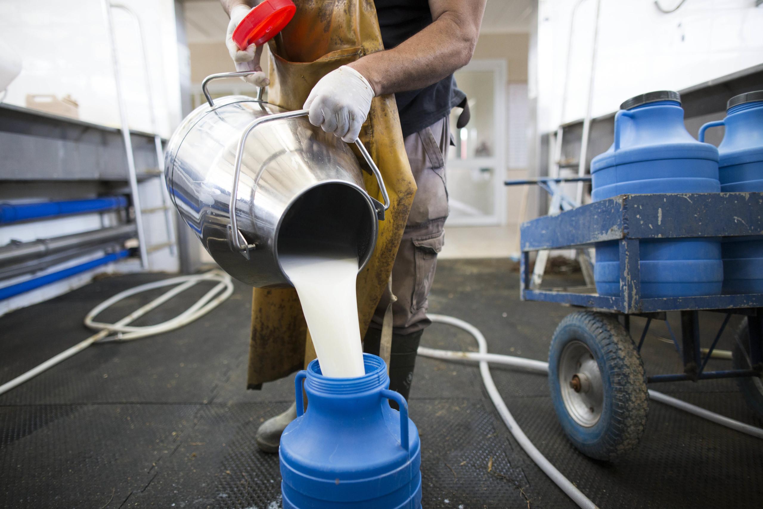 Portugal negoceia com Brasil venda de leite dos Açores