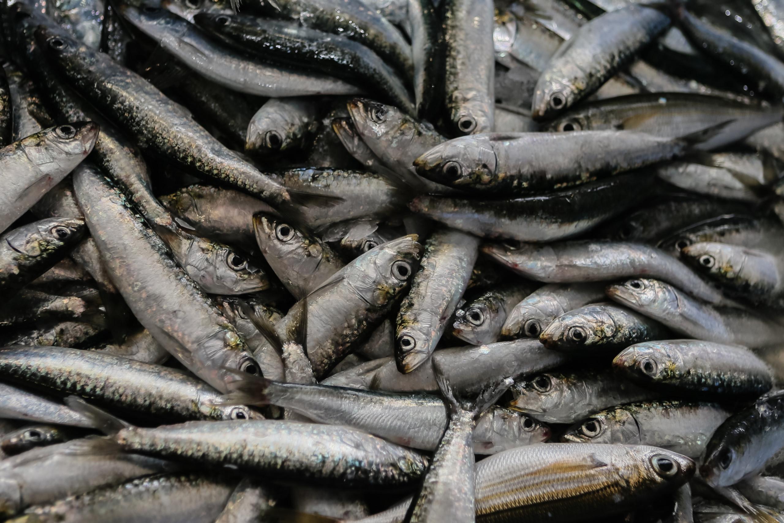 DIA remove latas de sardinha por possível falha de esterilização