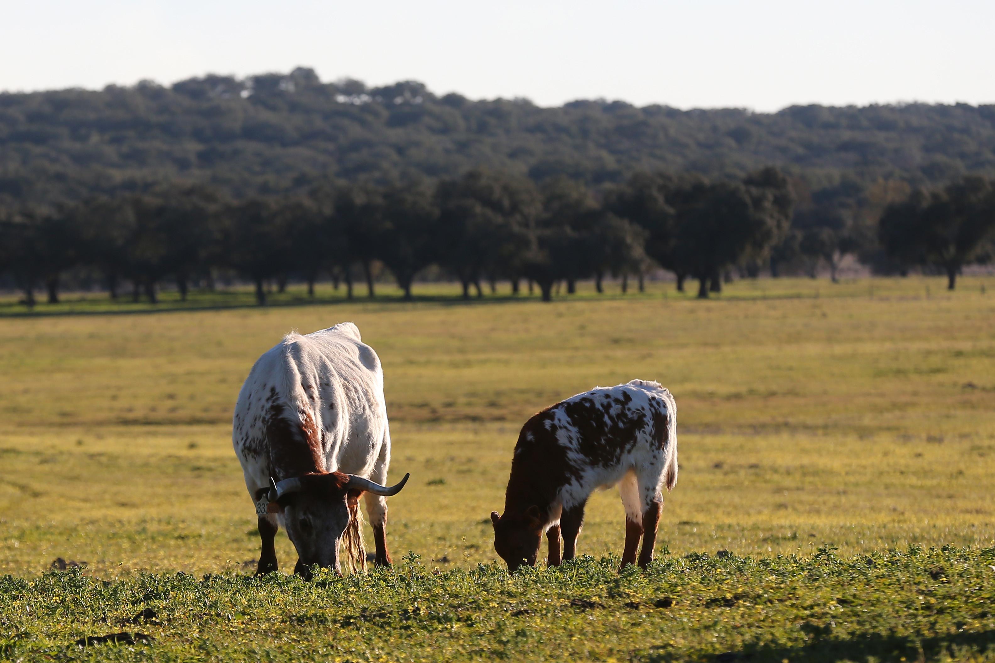 Explorações podem ficar sem alimento para animais já amanhã