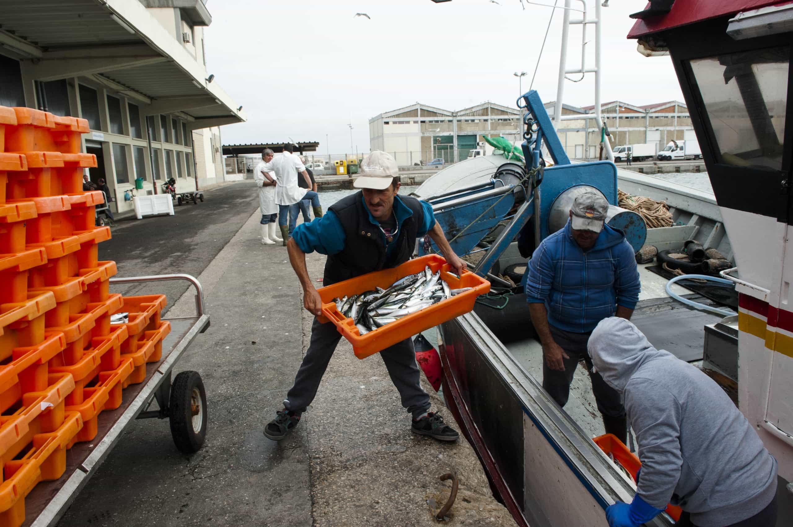 Peixe vendido na Docapesca sobe 0,9% em 2018 e atinge valor recorde