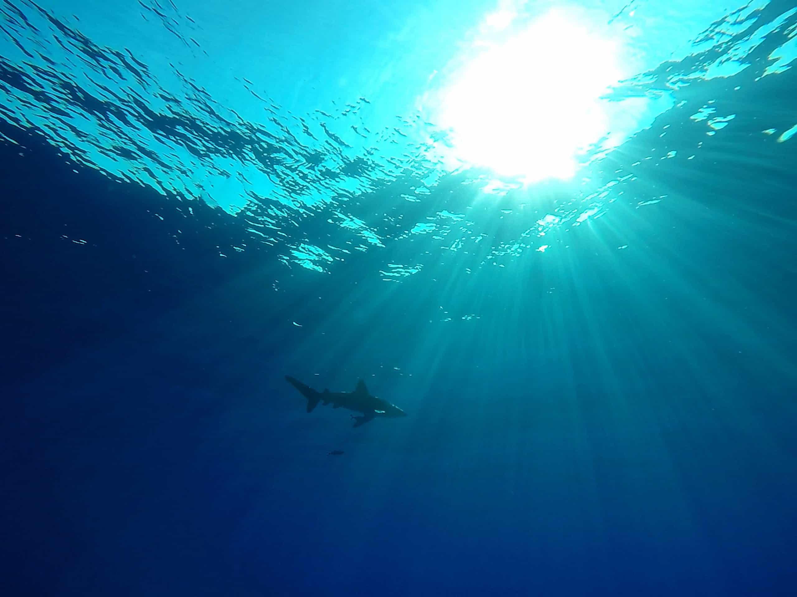 Risco: 17 espécies de tubarões e raias colocadas na Lista Vermelha