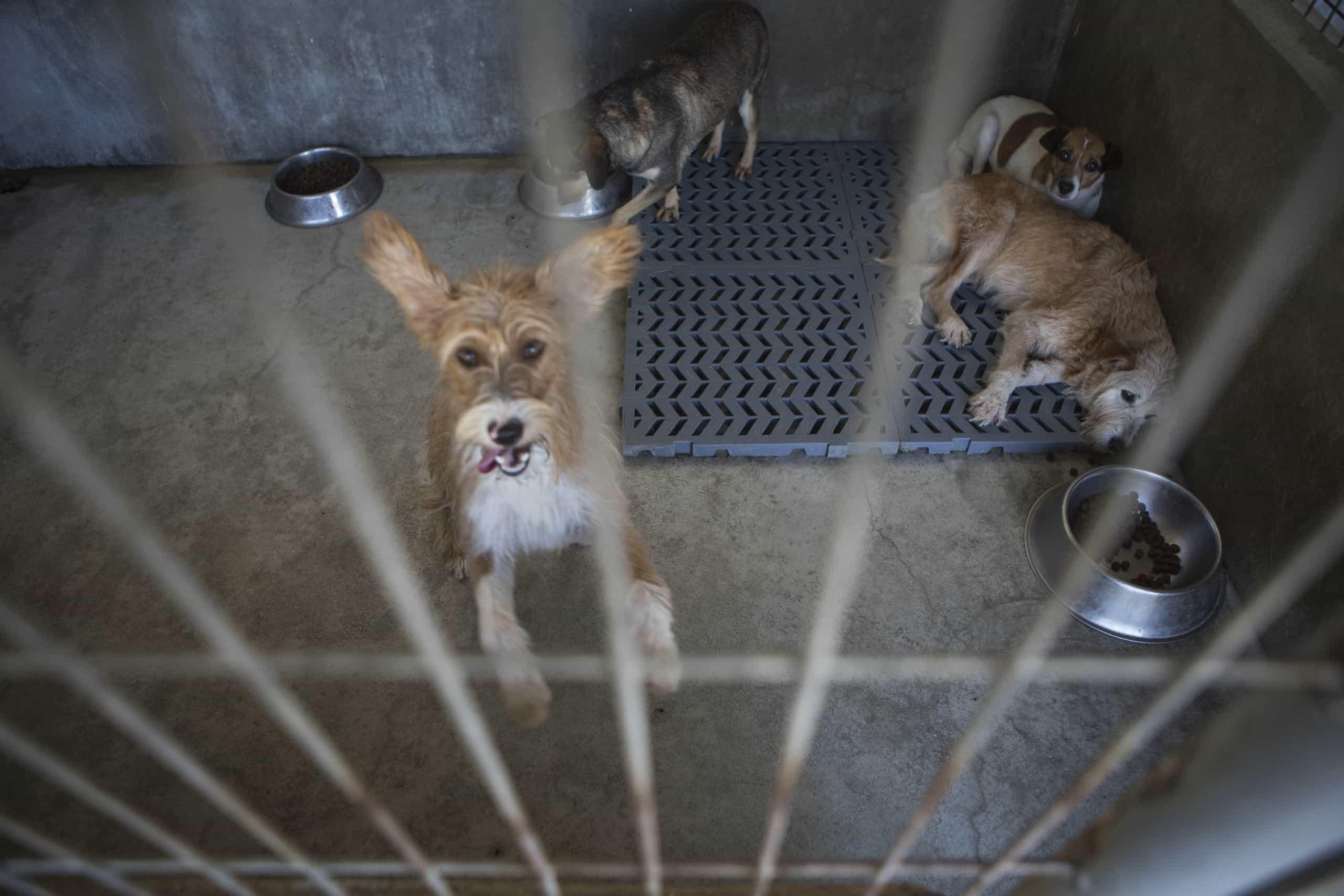 GNR resgata 38 animais de companhia em habitação no Montijo