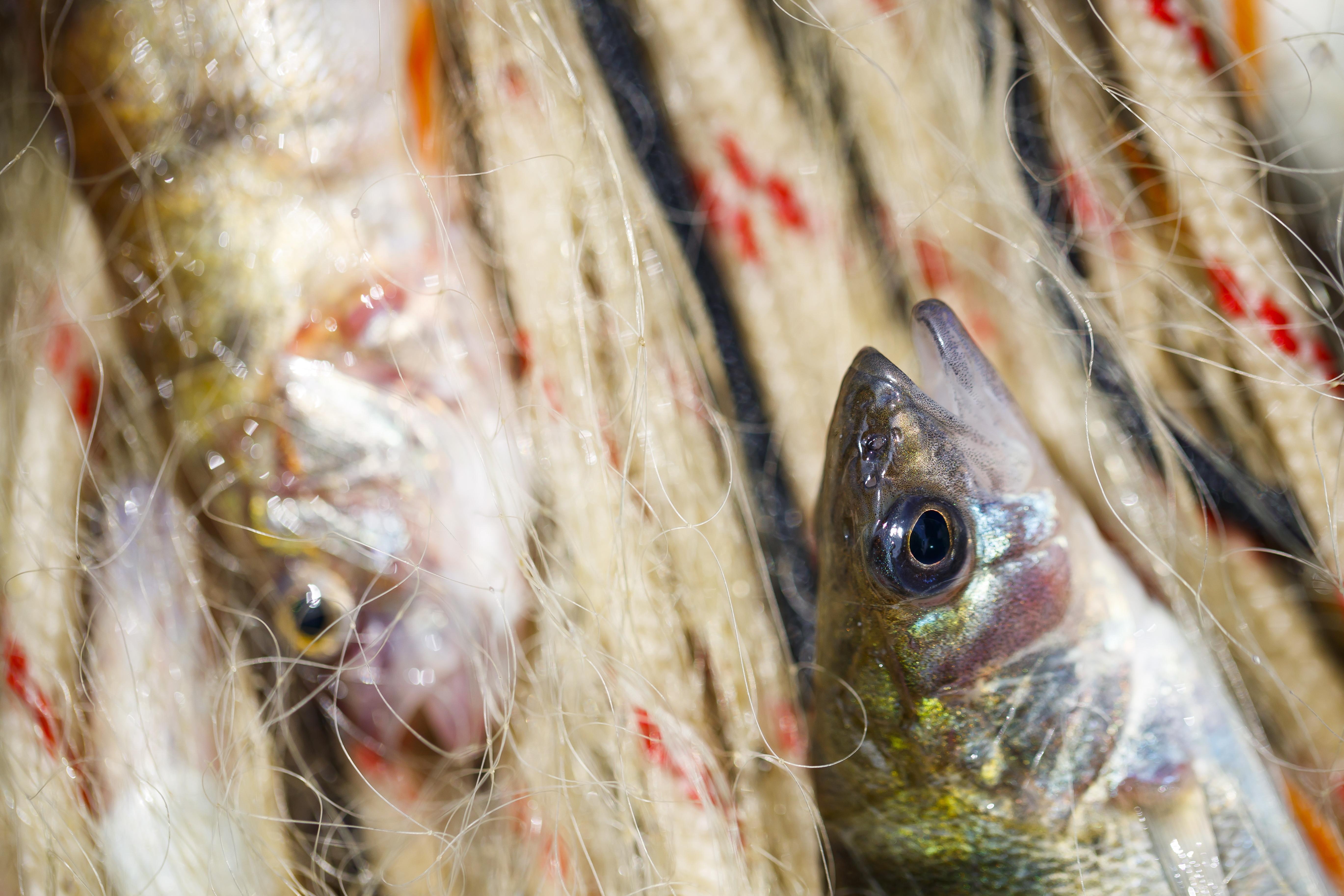 Portugal importou mais de 300 mil toneladas de peixe e exportou 153 mil