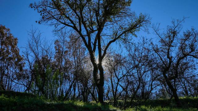 Abertas candidaturas a apoios para reforço da defesa floresta