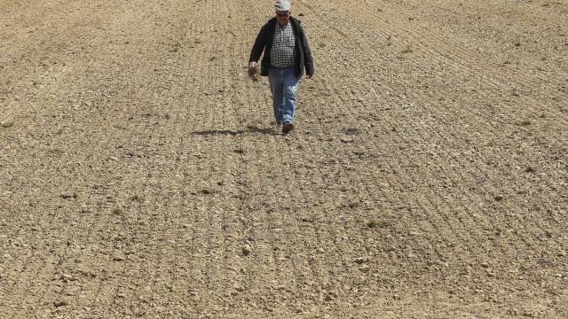 """Seca: Agricultores de Campilhas e Alto Sado temem """"ano de calamidade"""""""