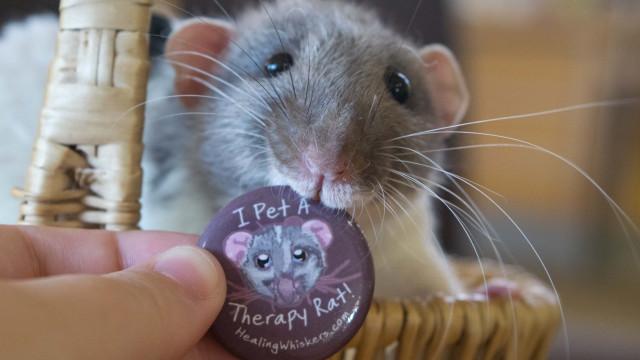 Vicente, o rato que visita escolas e bibliotecas para ajudar crianças