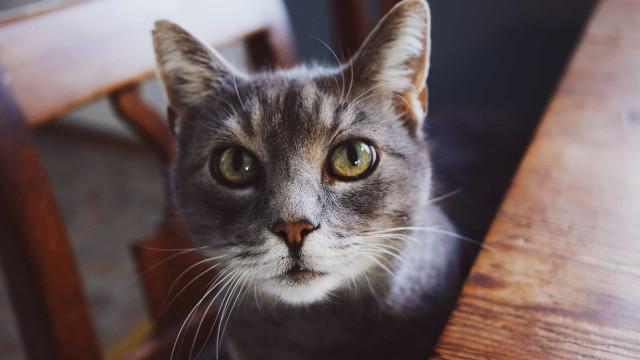 Cinco alimentos humanos que o seu gato pode comer