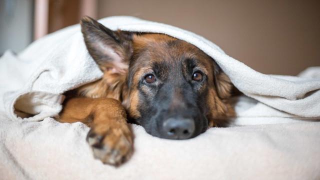 Dez sinais de que o seu cão pode estar gravemente doente