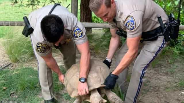 Autoridades ajudam a reunir tartaruga de 113kg com os seus donos nos EUA