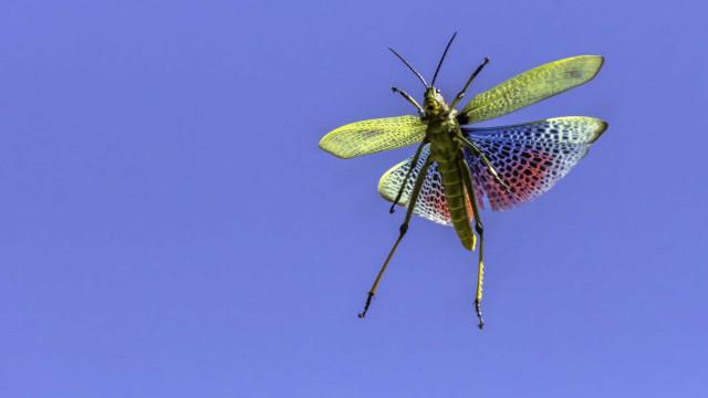 Comer insetos pode prevenir cancro, garante um novo estudo