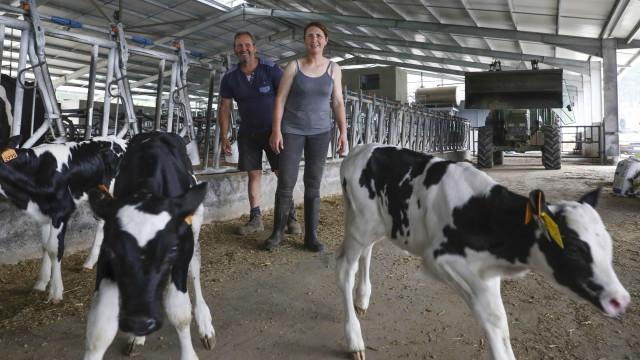 Família que perdeu 500 vacas em fogo reergue-se com ajuda da comunidade