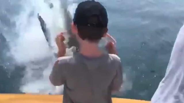 Surpresa na pescaria. Tubarão branco surgiu do nada e roubou peixe