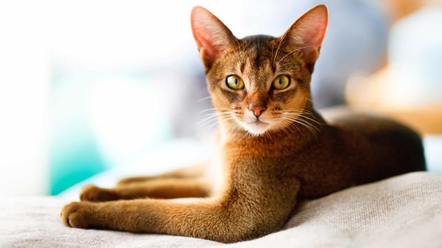 Trata realmente bem do seu gato? 8 dicas para um bichano feliz e saudável