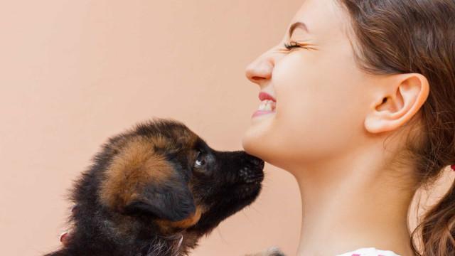 Adotar um cão pode ser igual a escolher alguém para namorar