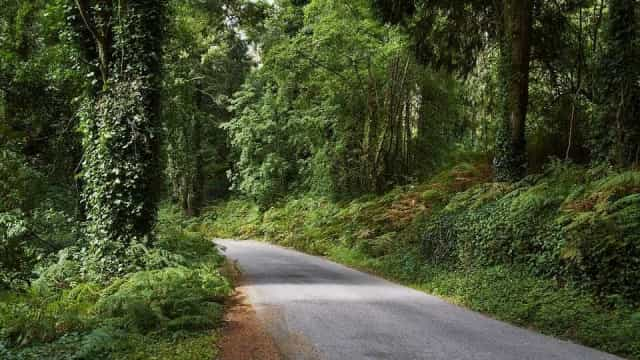 Governo cria plano de recuperação florestal em Mação, Sertã e Vila de Rei
