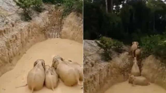 Elefantes presos em mina abandonada na Malásia foram resgatados