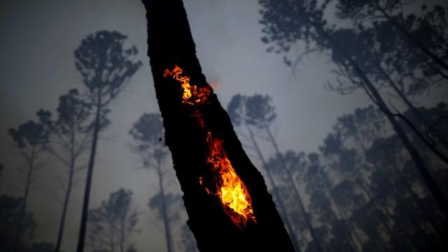 Amazónia. Do paraíso ao inferno das chamas