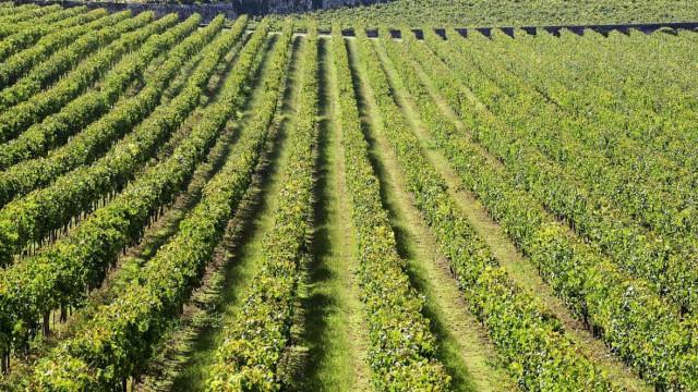 Rota dos Vinhos Verdes promove 'Dia de Portas Abertas' a 7 de setembro