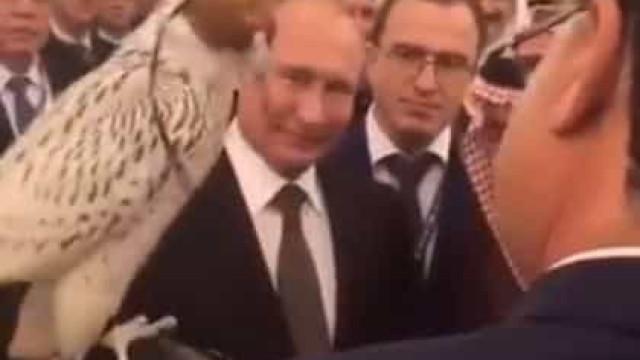 Putin oferece falcão a rei saudita e ave defeca por todo o lado. Ora veja