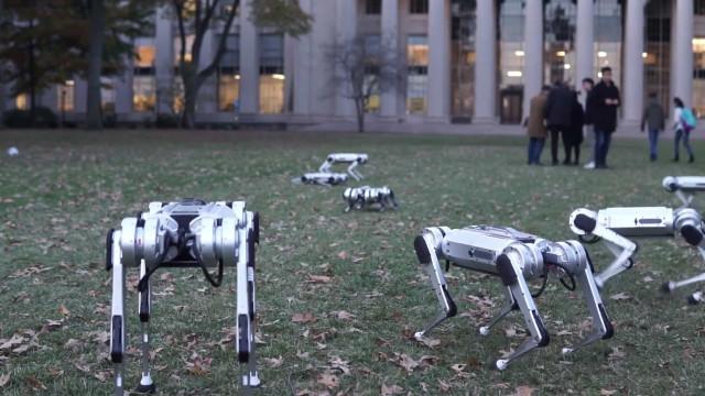 Os robots do MIT são capazes de andar, saltar e até 'esconder'