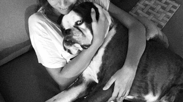 Após operação, Jessica Athayde mostra vídeo do cão Júlio