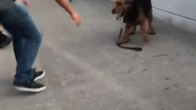 Cão à solta em autoestrada nos EUA foi resgatado por condutores