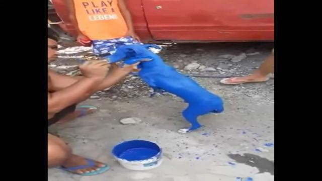 """Jovem condenado por ter pintado cão de azul para lhe """"tirar a sarna"""""""