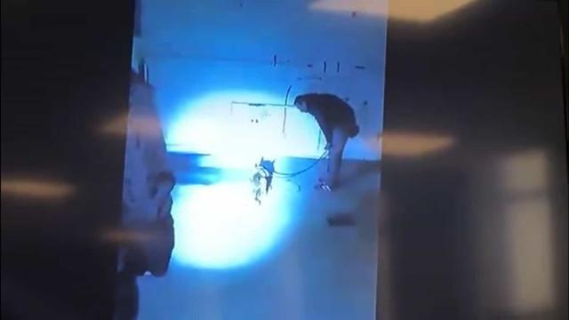 Revelado momento em que cão-polícia encontrou corpo de Diana Quer
