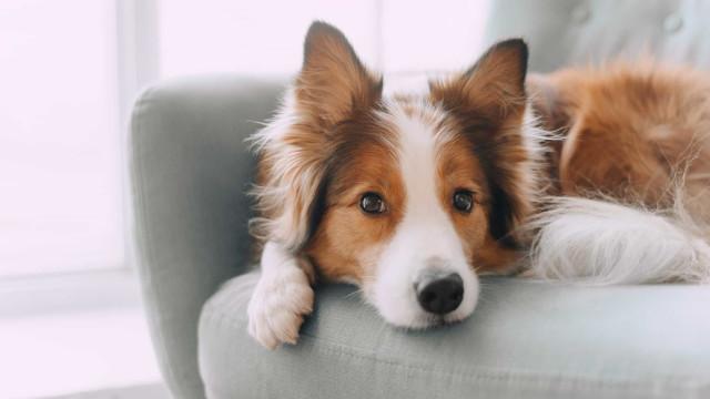 Os cães lembram-se de tudo o que fazemos (mesmo tudo). Cuidado