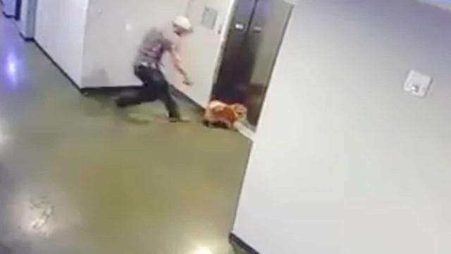 Vizinho salva cão após trela ficar presa nas portas do elevador do prédio