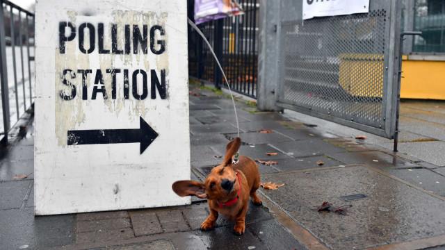 Eleitores de quatro patas saíram hoje à rua no Reino Unido para votar